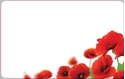 Front Template 0021 - Poppies Close-Up