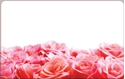 Front Template 0023 - Roses