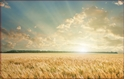 Front Template 0032 - Wheat Field Sunset