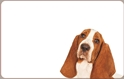 Front Template 0046 - Dog