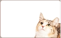 Front Template 0048 - Kitty
